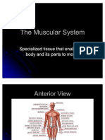 The Muscular System Power Point 1227697713114530 8