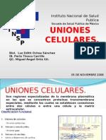 Uniones Celulares y Staphylococus Piel Escalada (Luz, Perla y Miguel)