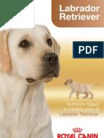 Folleto Labrador Retriever[1]