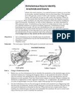 claves de arañas y otros insectos