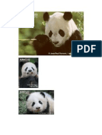 Giant Panda Pictures
