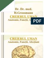 Suport Curs Anatomia Creierului