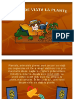 Ciclul de Viata Al Plantelor