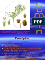 5 Cummin