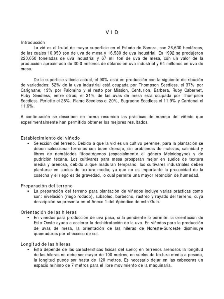Único Anatomía Vid De Uva Colección de Imágenes - Anatomía de Las ...