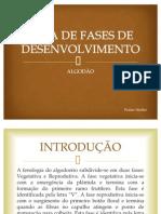 GUIA DE FASES DE DESENVOLVIMENTO ALGODÃO