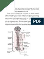 Anatomi & Cedera Medulla Spinalis