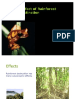 Effect of Rain Forest Extinction (Group 3)
