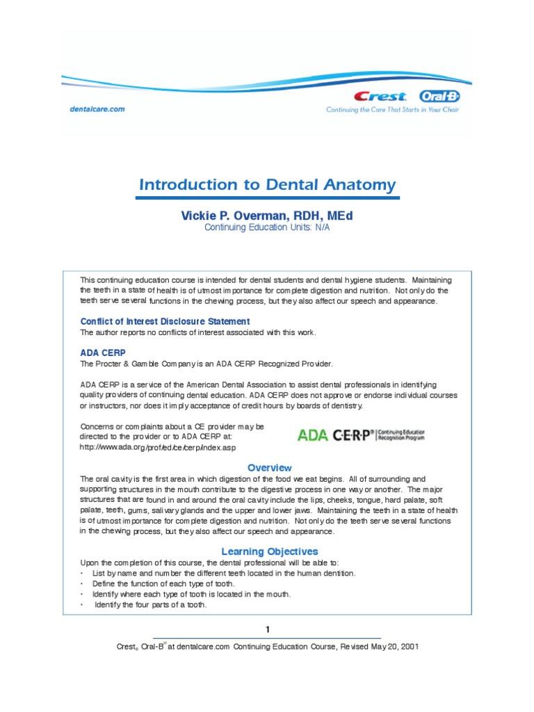 Ce104 Tooth Dental Anatomy