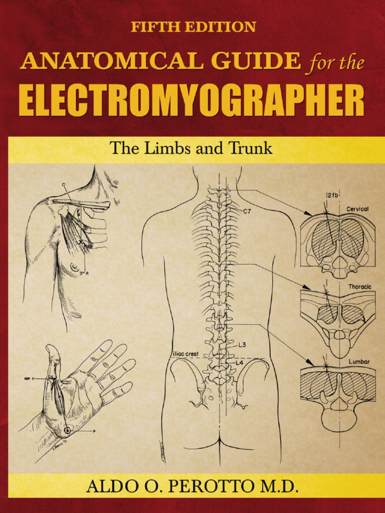 anatomical guide for the electromyographer pdf