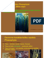 8.BAG Phaeophyta 2009 10
