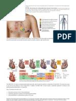 How to install EKG / ECG Lead.pdf