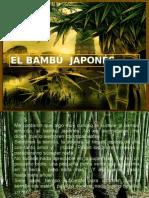 El bambú japonés