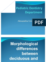 Difference Between Primary and Permanent Teeth 1