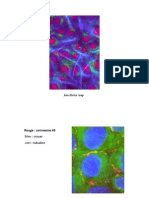 ion Tissu Nerveux Et Musculaire