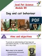 B5 Dog and Cat Behaviour