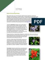 Edible Ornamental Plants