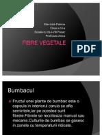 Fibre Vegetale Patri