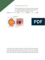 Pengertian Mata Struktur Dan Definisi Mata