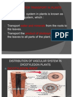 Transport in Plant
