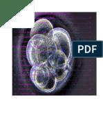 Chapitre I Organisation Générale Des Cellules