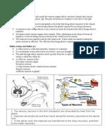 Nervous Coordination Notes