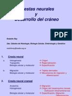 Crestas Neurales y Craneo