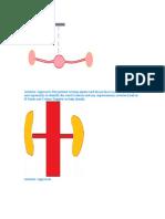 Renal Artery Doppler Ns