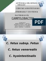 Campylobacter's