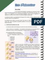Genetica Molecular Teoría