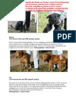 Frankreichhunde Jan2012