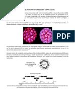 Virus Del Papiloma Humano Como Agente Causal