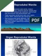 Sistem-Reproduksi-Wanita
