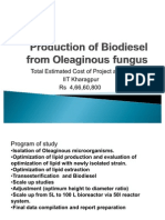 Production of Biodiesel From Oleaginous Fungus