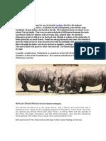 Rhinocerus and Tailor Bird
