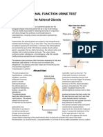 Adrenal Function Urine Test