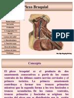 plexobraquial-100502194124-phpapp01