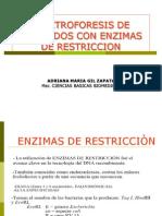 Enzimas de Restriccion y Electroforesis Gbm 2012