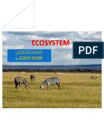 Ecosystem Ok
