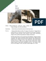 Fauna Zona Peralihan