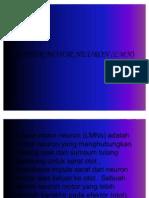 Lower Motor Neuron (LMN)