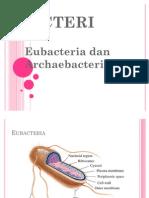 Bacteri
