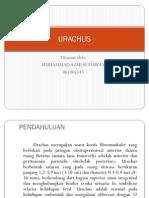 URACHUS persentation