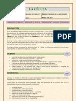 Webquest La Celula