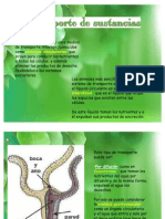 Aparato CirculatorioRespiratorio y Excretor