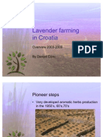 Lavender Farming in Croatia