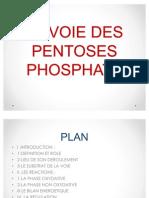 La Voie Des Pentoses Phosphate