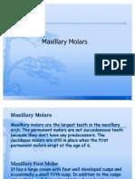 Maxillary Molars