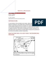 sistema-digestivo-bovino