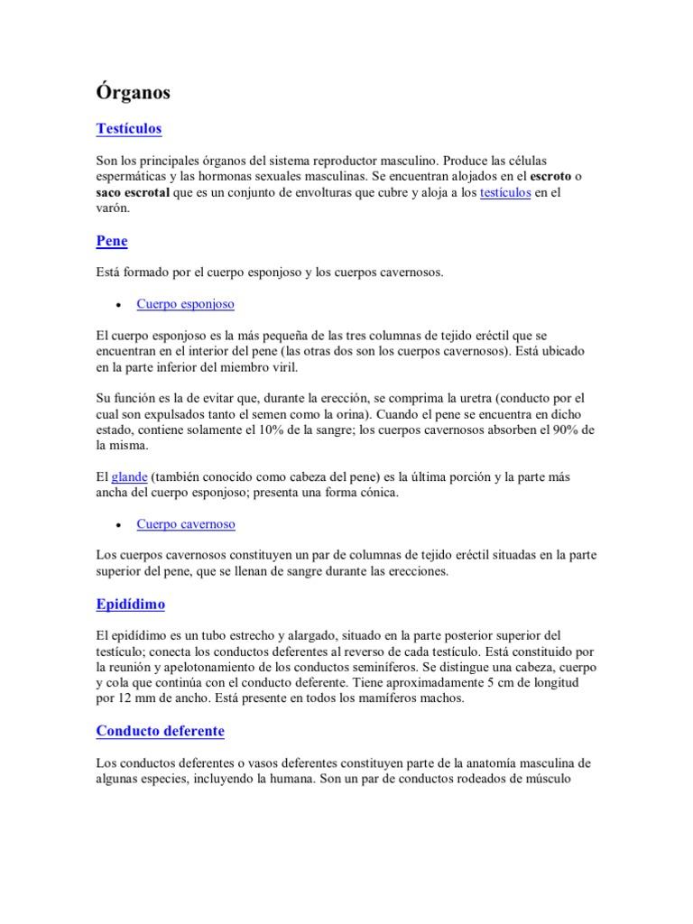 Contemporáneo La Anatomía Del Cuerpo Cavernoso Festooning - Imágenes ...